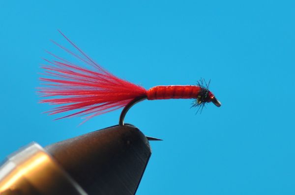Micro bloodworm Turrall