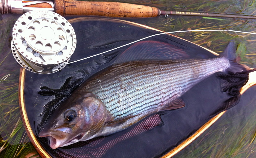 Grayling Fly Fishing