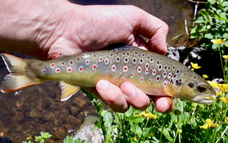 Guided fly fishing Devon Somerset