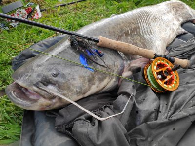 Fly fishing for wels catfish UK
