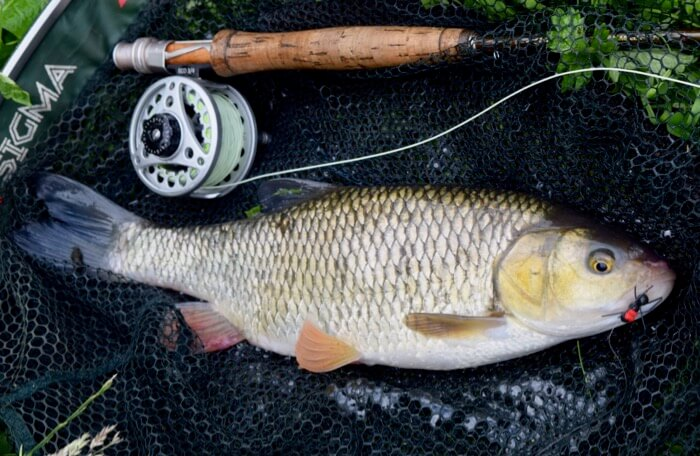 Fly fishing for chub: Mixed fortunes on a rising River Tone
